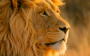 upgrading to Lion – the goldenrules!